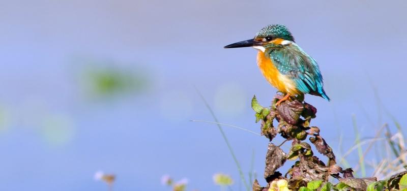 bird-watching-chitwan-park