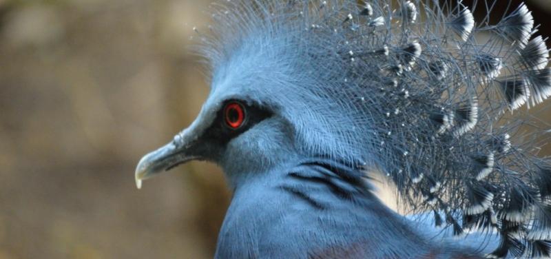 bird-watching-chitwan