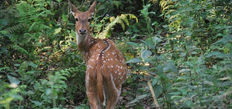 chitwan-wildlife
