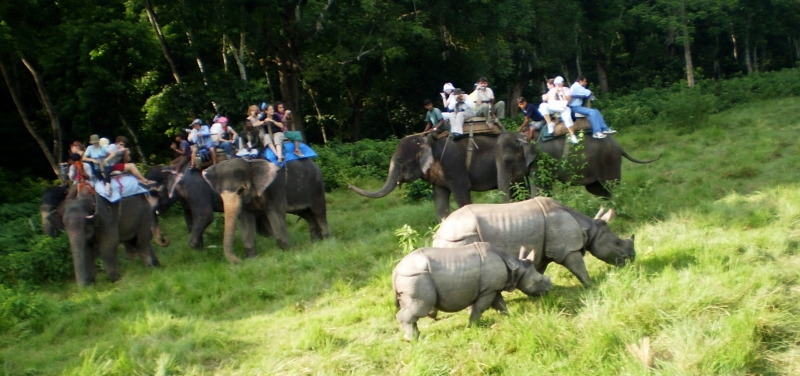 elephant-safari-chitwan