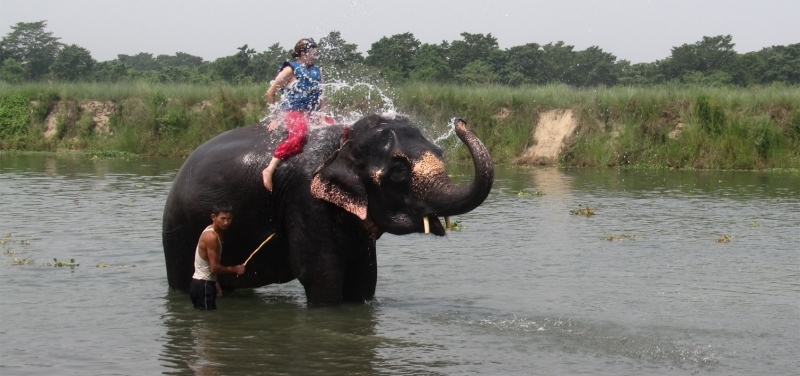 elephant_bathing_chitwan