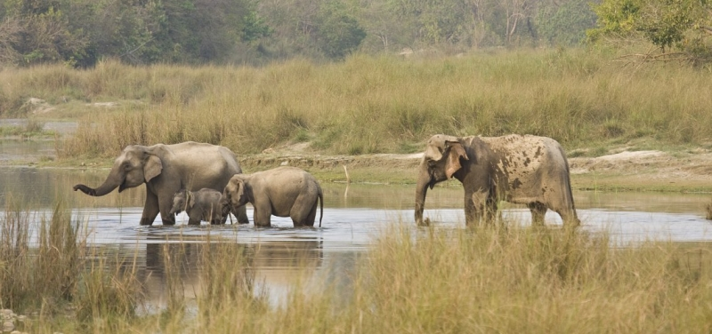 elephants-bardia-national-park