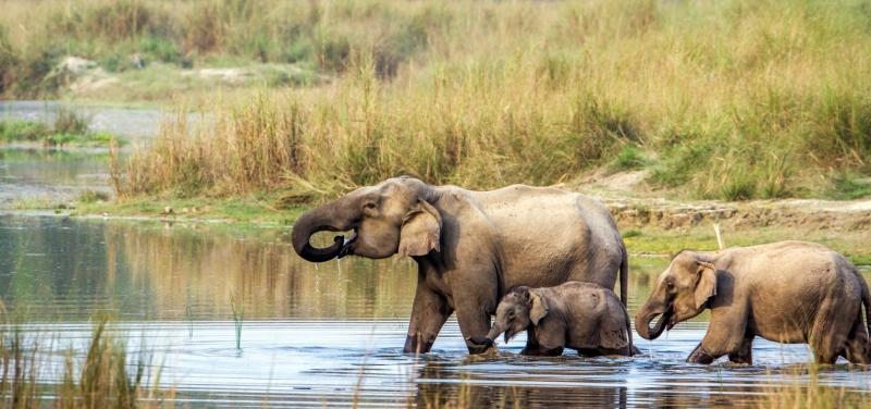 elephants-in-Chitwan