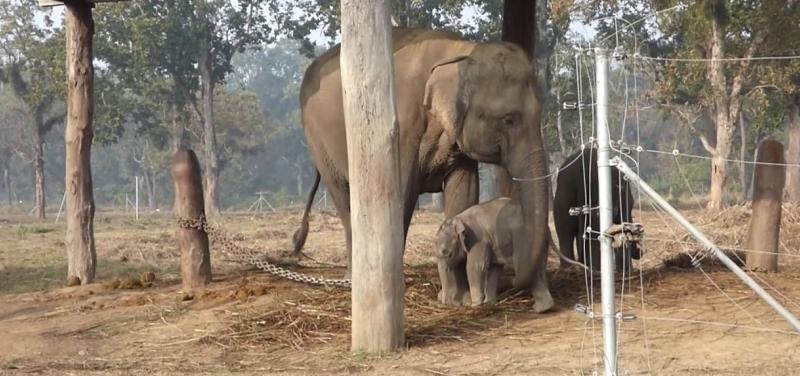 elephnat-breeding-centre