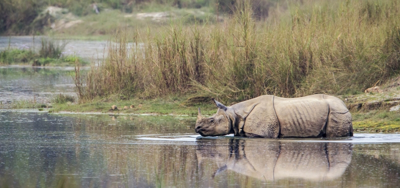 rhino-bardia